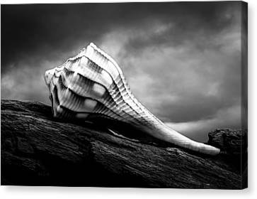 Seashell Without The Sea Canvas Print