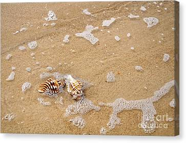 Seashells And Bubbles Canvas Print by Kaye Menner