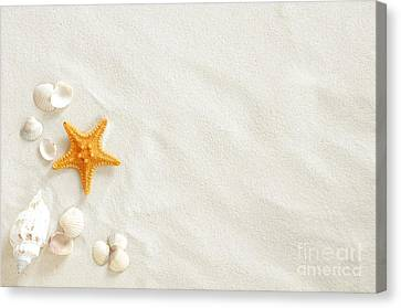 Seashells Canvas Print by Boon Mee