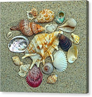 Seashells Collection Canvas Print by Sandi OReilly