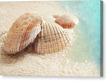 Seashells In The Wet Sand Canvas Print by Sandra Cunningham