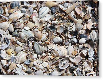 Seashells On The Beach Canvas Print