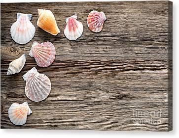 Seashells On Wood Canvas Print by Olivier Le Queinec