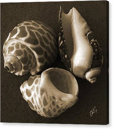 Seashells Spectacular No 1 Canvas Print
