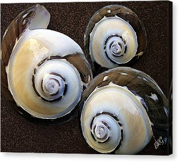 Seashells Spectacular No 23 Canvas Print