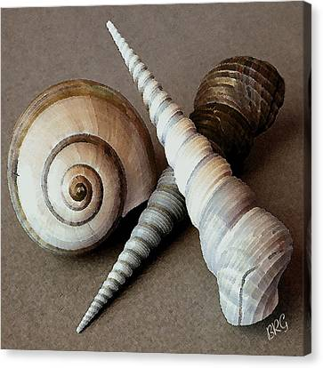 Marine Canvas Print - Seashells Spectacular No 24 by Ben and Raisa Gertsberg