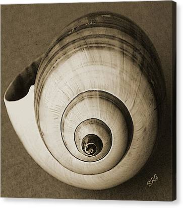 Canvas Print featuring the photograph Seashells Spectacular No 25 by Ben and Raisa Gertsberg
