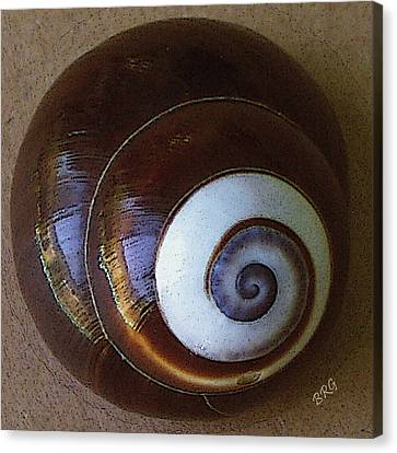 Canvas Print featuring the photograph Seashells Spectacular No 26 by Ben and Raisa Gertsberg