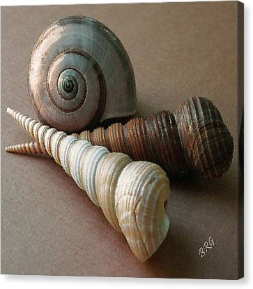 Canvas Print featuring the photograph Seashells Spectacular No 29  by Ben and Raisa Gertsberg