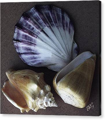 Canvas Print featuring the photograph Seashells Spectacular No 30 by Ben and Raisa Gertsberg