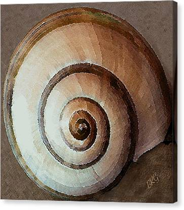 Canvas Print featuring the photograph Seashells Spectacular No 34 by Ben and Raisa Gertsberg