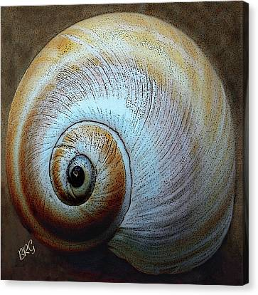 Canvas Print featuring the photograph Seashells Spectacular No 36 by Ben and Raisa Gertsberg