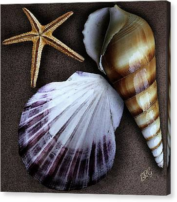 Canvas Print featuring the photograph Seashells Spectacular No 37 by Ben and Raisa Gertsberg