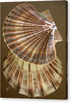 Canvas Print featuring the photograph Seashells Spectacular No 54 by Ben and Raisa Gertsberg