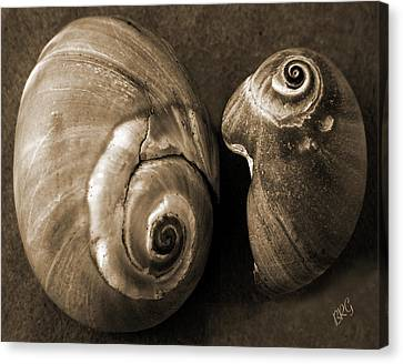 Canvas Print featuring the photograph Seashells Spectacular No 6 by Ben and Raisa Gertsberg