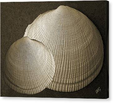 Canvas Print featuring the photograph Seashells Spectacular No 8 by Ben and Raisa Gertsberg