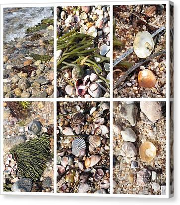 Seashore Collage Canvas Print by Carol Groenen