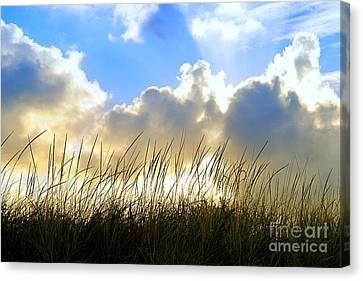 Seaside Grass And Clouds Canvas Print