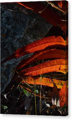 Seasonal Color Theory Canvas Print