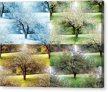 Seasonal Orchard Collage Canvas Print by Shana Rowe Jackson