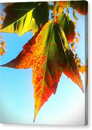 Season's Change Canvas Print by James Aiken