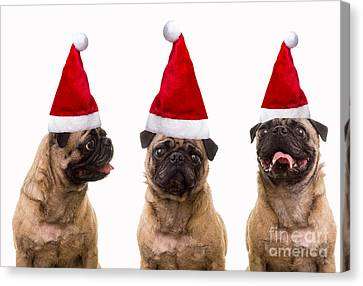 Seasons Greetings Christmas Caroling Pug Dogs Wearing Santa Claus Hats Canvas Print by Edward Fielding