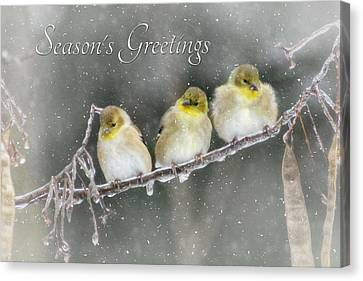 Season's Greetings Canvas Print by Lori Deiter