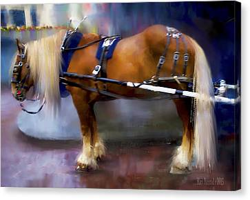 Seattle Carriage Horse Canvas Print by Kari Nanstad