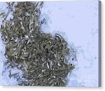 Seaweed Canvas Print by Carol Lynch