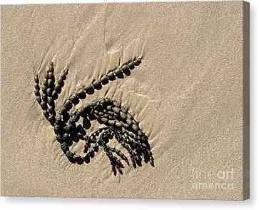 Seaweed On Beach Canvas Print by Steven Ralser