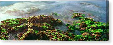 Roca Canvas Print - Seaweed On Rocks At The Coast, Las by Panoramic Images