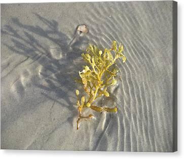 Seaweed Sand Canvas Print