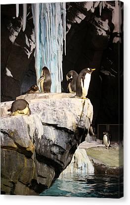 Seaworld Penguins Canvas Print