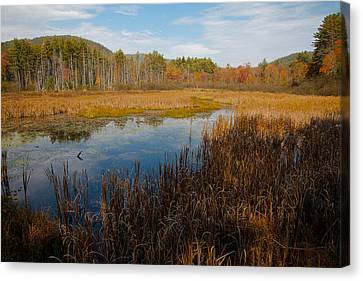 Secluded Adirondack Pond Canvas Print by David Patterson
