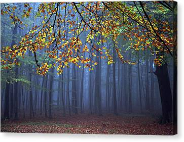 Leaves Canvas Print - Seconds Before The Light Went Out by Roeselien Raimond