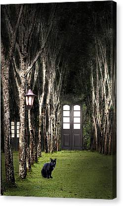 Secret Forest Dwelling Canvas Print