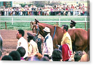 Secretariat Race Horse Looking At Me Before He Won A Big Race At Arlington Race Track In 1973.  Canvas Print