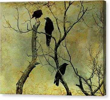 Secretive Crows Canvas Print