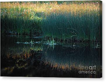 Canvas Print featuring the photograph Sedges At Sunset by Cynthia Lagoudakis