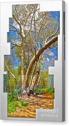 Sedona Arizona Big Tree Canvas Print by Gregory Dyer