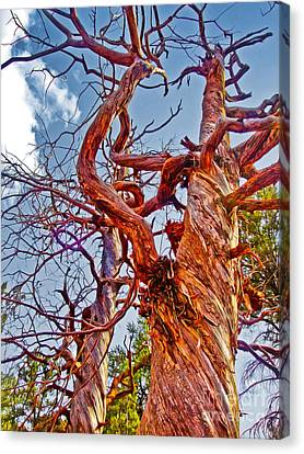 Sedona Arizona Ghost Tree Canvas Print by Gregory Dyer