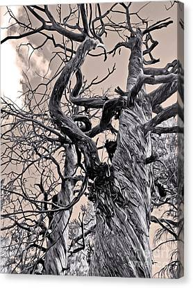 Sedona Arizona Ghost Tree In Black And White Canvas Print by Gregory Dyer