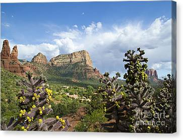Sedona Cactus In Bloom Canvas Print by Maria Janicki