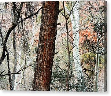 Brown White Sedona Trees Canvas Print - Sedona Layers by Todd Sherlock