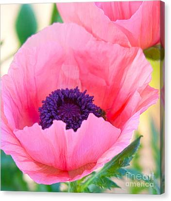 Seductive Poppy Canvas Print by Roselynne Broussard