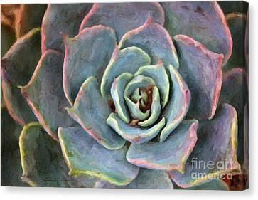 Sedum With Pink Edges Canvas Print