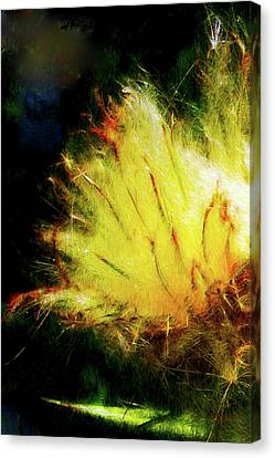 Seedburst Canvas Print