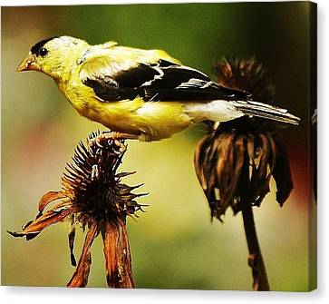 Canvas Print featuring the photograph Seeds For Me... by Al Fritz