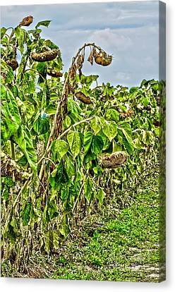 Seeds Canvas Print by Baywest Imaging