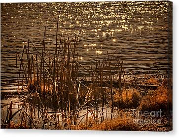 Seegrass Riple Canvas Print
